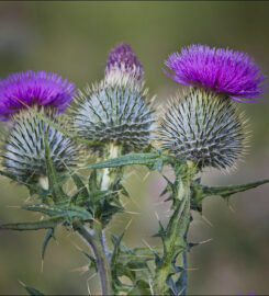 Highland Vibrational Medicine