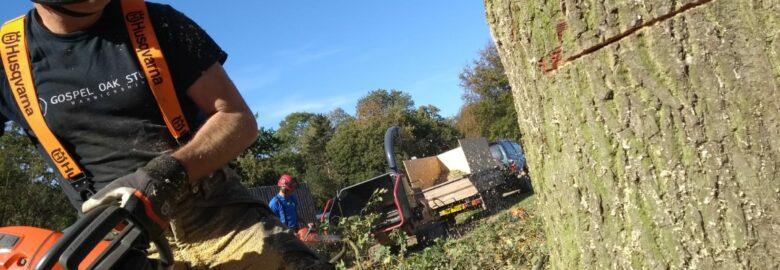Ashorne Oak Tree & Garden Services