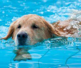 Canine Health & Hydro
